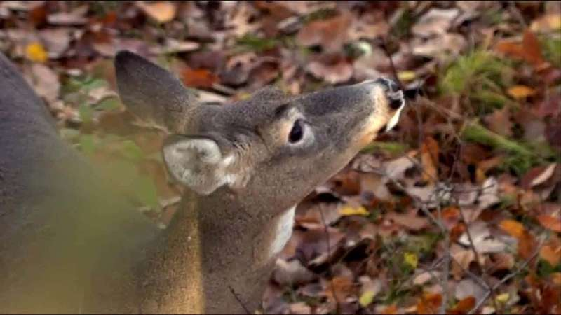 Defeating a Whitetail's Nose 101