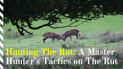 Hunting The Rut