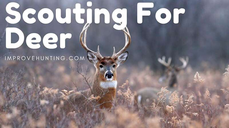 Scouting For Deer